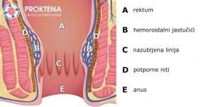 Anatomski presjek
